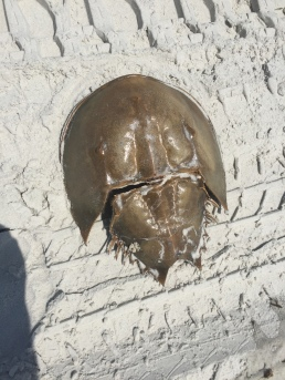 crab-bonus